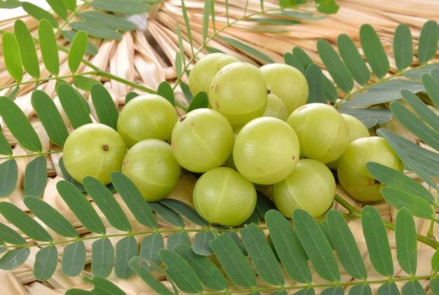 Amla-Amlaki-Indian Gooseberry